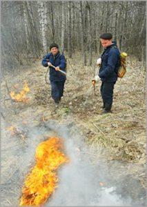 Продолжаем сотрудничество в сфере охраны и защиты лесов